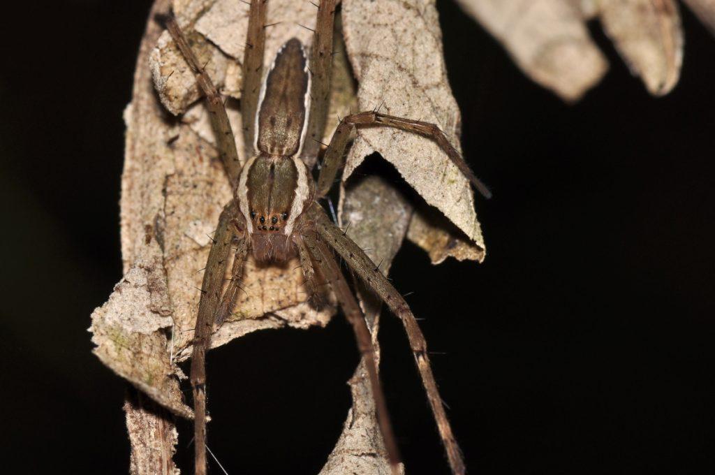hobo-spider-1024x680-1