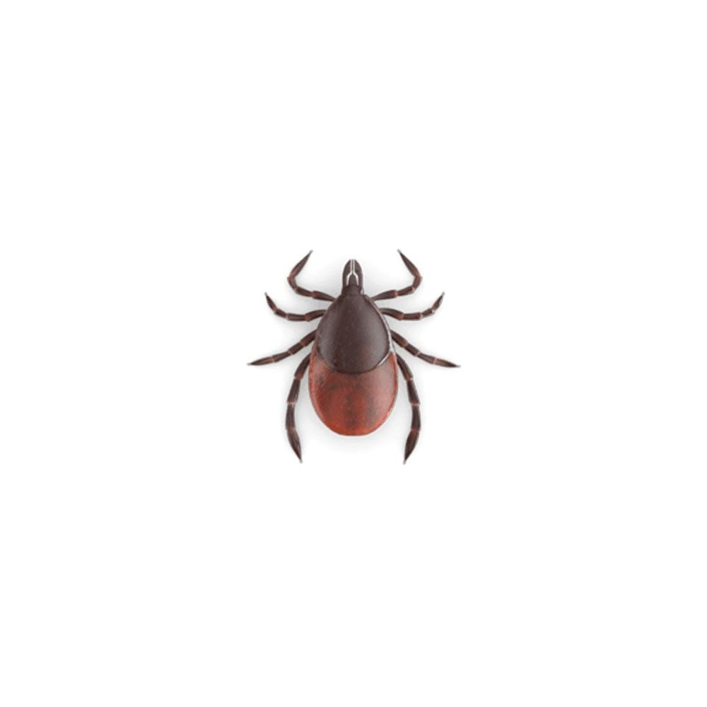 pest-library-ticks
